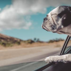Foto de um cachorro pegando vento da janela de um carro